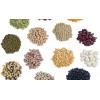 Семена и луковичные